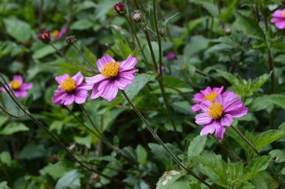 M21.flowers