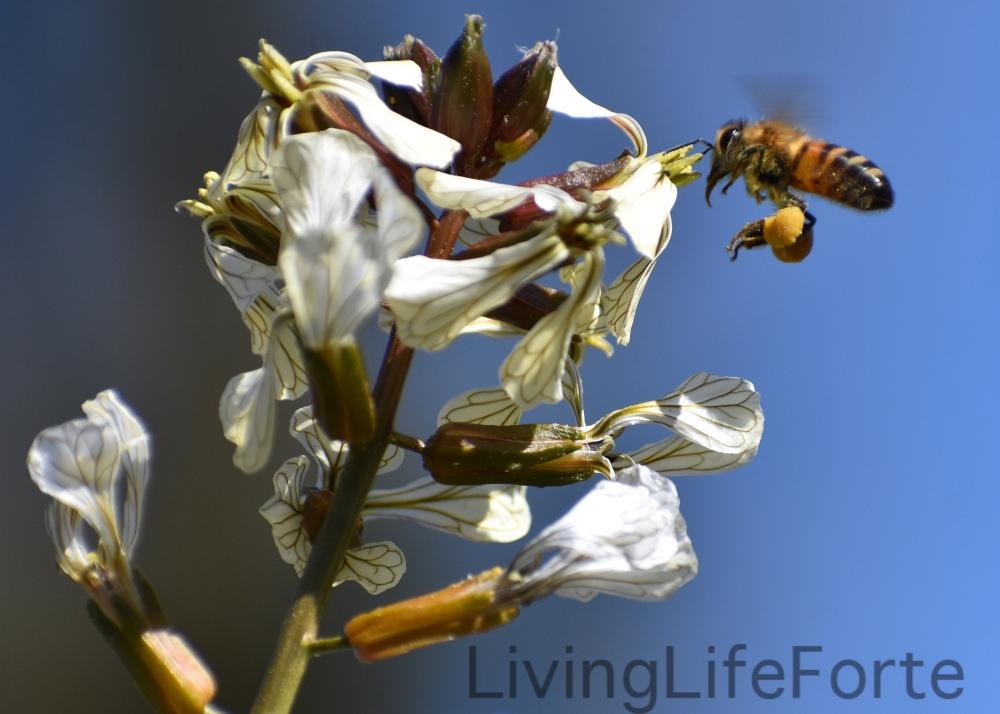 honeybeeandarugula