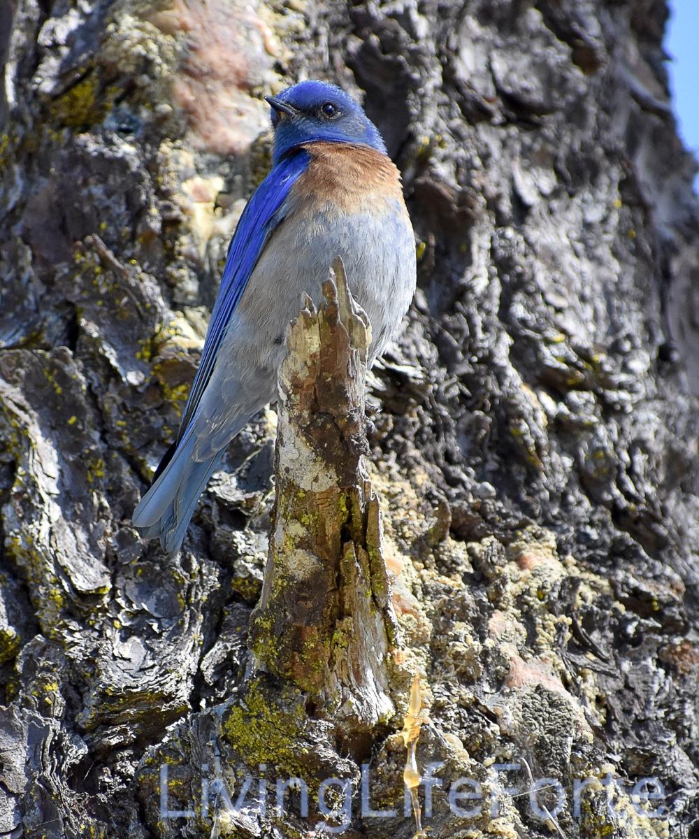 male.blue