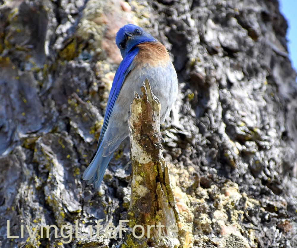 male.blue2